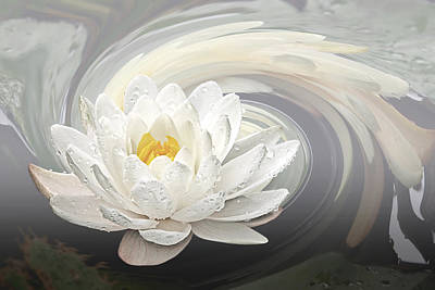 Water Lily Whirlpool Poster by Gill Billington