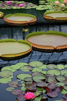 Waterlilies And Platters 2 Poster by Byron Varvarigos