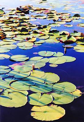Waterlilies Poster by Jan Amiss Photography
