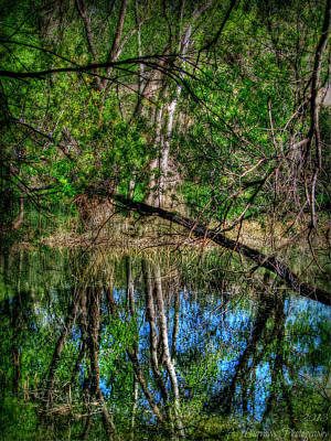 Watson Woods Reflection Hdr Poster by Aaron Burrows