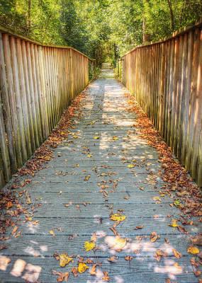 Wehr Nature Center Bridge In Autumn  Poster by The  Vault - Jennifer Rondinelli Reilly
