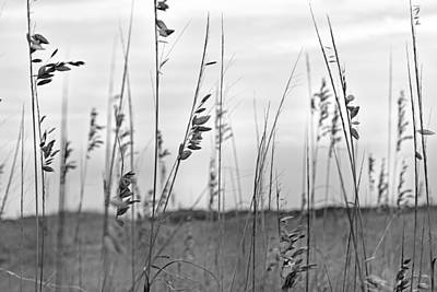 Whispering Sea Oats Bw Poster by Betsy Knapp