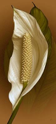 White Anthurium Flower Poster by Ben and Raisa Gertsberg