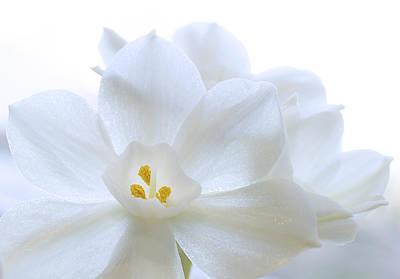 White Blooms Poster by Mariola Szeliga