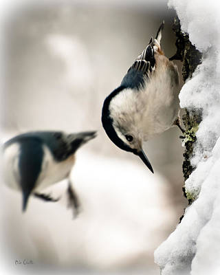 Birdwatching Poster featuring the photograph White Breasted Nuthatch In The Snow by Bob Orsillo