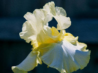 White Iris With Yellow Poster by Omaste Witkowski