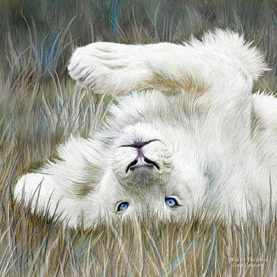 White Lion - Wild In The Grass Sq Poster by Carol Cavalaris