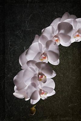 White Orchid Still Life Poster by Tom Mc Nemar