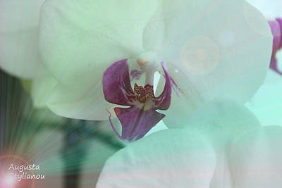 White Orchids In Rays Poster by Augusta Stylianou
