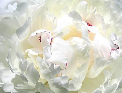 White Peony Poster by Will Borden