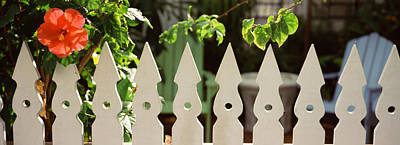 White Picket Fence And Red Hibiscus Poster by Panoramic Images