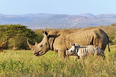White Rhinos Poster by Bildagentur-online/mcphoto-schaef
