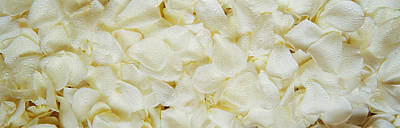 White Rose Petals Poster by Panoramic Images