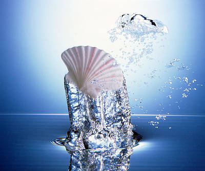 White Scallop Shell Being Raised Poster by Panoramic Images