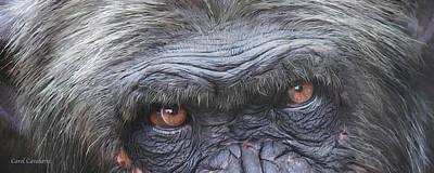 Wild Eyes - Chimpanzee  Poster by Carol Cavalaris