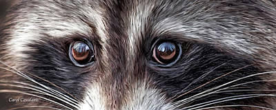 Wild Eyes - Raccoon Poster by Carol Cavalaris