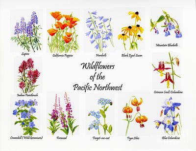Wild Flowers Of The Pacific Northwest Poster Poster by Sharon Freeman