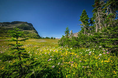 Wild Mountain Flowers Glacier National Park   Poster by Rich Franco