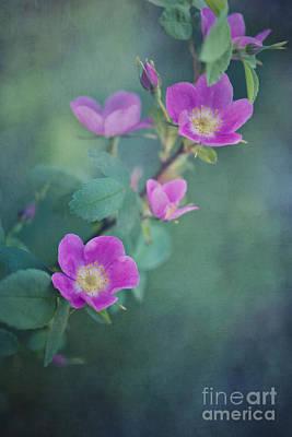 Wild Roses Poster by Priska Wettstein