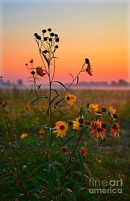 Wild Sunflowers At Dawn Poster by Julie Dant