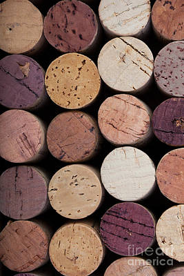 Wine Corks 1 Poster by Jane Rix