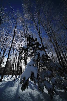 Winter Blue Poster by Karol Livote