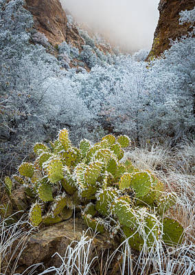 Winter Cacti Poster by Inge Johnsson