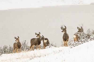Winter Deer Poster by Brittany Schwartz