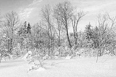 Winter Forest Landscape Poster by Elena Elisseeva