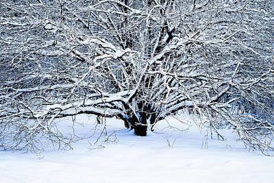 Winter Fresh Poster by Alexander Senin