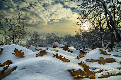 Winter Landscape Poster by Jelena Jovanovic