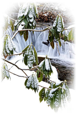 Winter Rhododendron And Waterfall Poster by Thomas R Fletcher