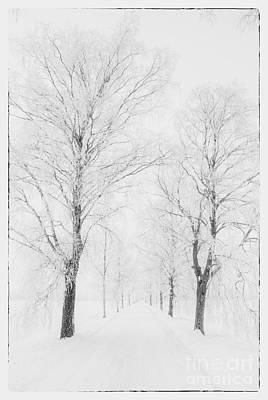 Winter Road Poster by Veikko Suikkanen