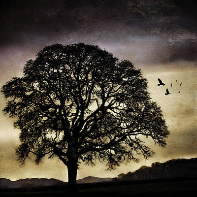 Winter Tree And Ravens Poster by Carol Leigh