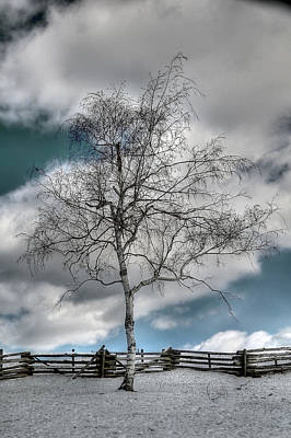 Winter Tree Poster by Todd Hostetter