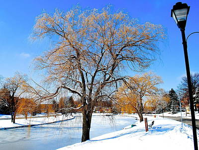 Winter Willow Poster by Frozen in Time Fine Art Photography