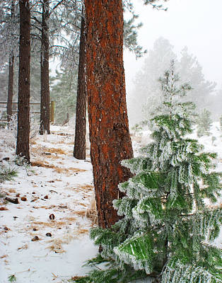 Winter Woodland Pine Tree Poster by Julie Magers Soulen