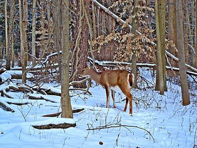 Wintering Whitetail Poster by BackHome Images
