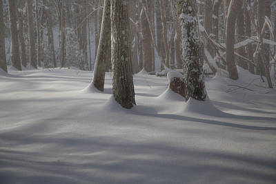 Winter's Light Poster by Rob Travis