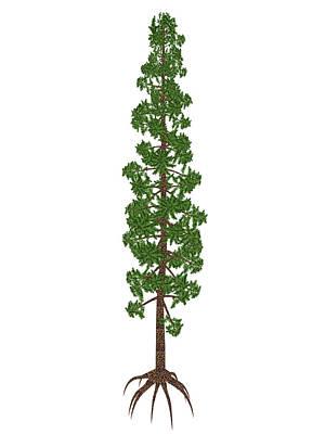 Wollemia Nobilis Prehistoric Tree Poster by Elena Duvernay