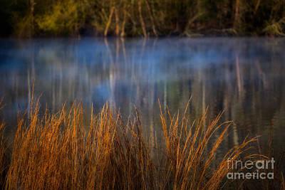 Woodland Dawn Poster by Doug Sturgess