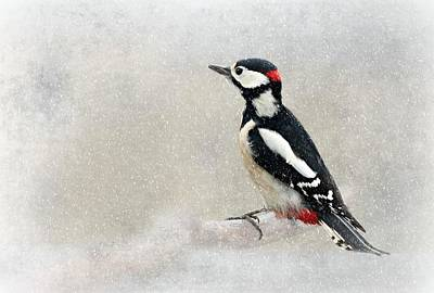 Woodpecker Poster by Heike Hultsch