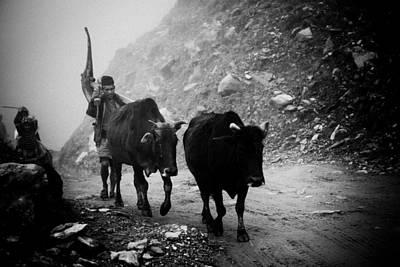 Work Hard Tamang People Langtang Nepal Poster by Raimond Klavins