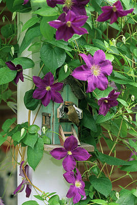 Wren In Birdhouse In Clematis Vine Poster by Jaynes Gallery