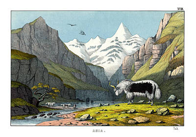 Yak Poster by Splendid Art Prints
