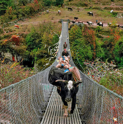 Yaks On Rope Bridge Poster by Babak Tafreshi