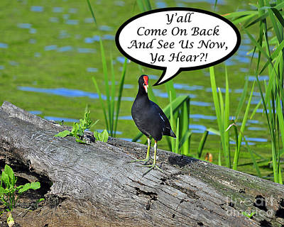 Y'all Come Back Moorhen Card Poster by Al Powell Photography USA