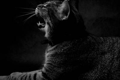 Yawning Cat Poster by Gary Marx