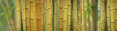 Yellow Bamboo Scape Poster by Cora Niele