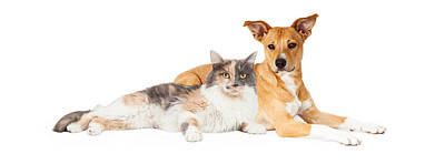 Yellow Dog And Calico Cat Poster by Susan Schmitz